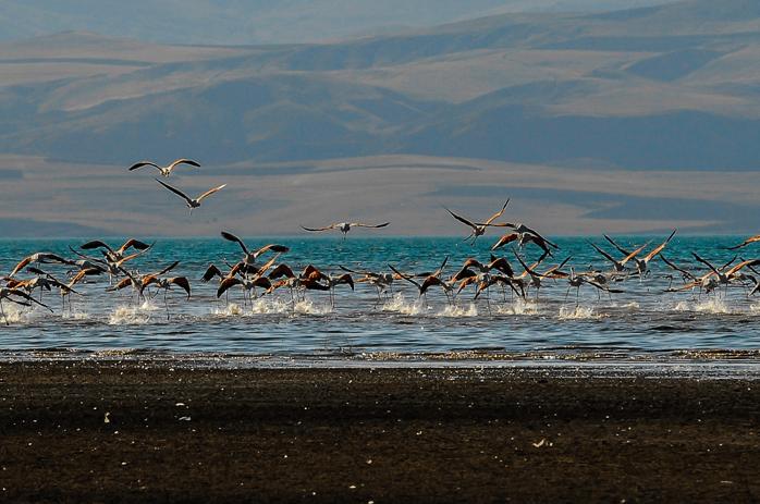 Erçek Gölü Kuş Cenneti